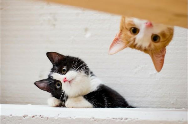 可爱猫猫照片微信图片