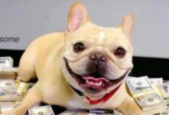 币圈众生相(一):一个狗场主人的故事