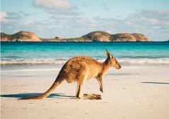 澳大利亚在监管规定修订后比特币的使用不断增加